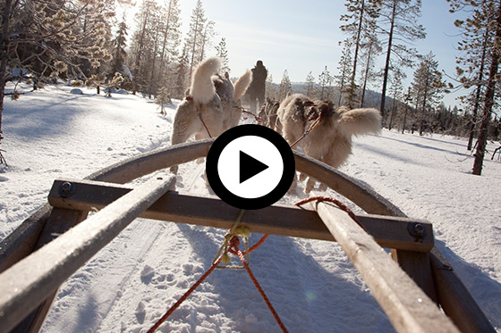 Winterexcursie: Huskysafari