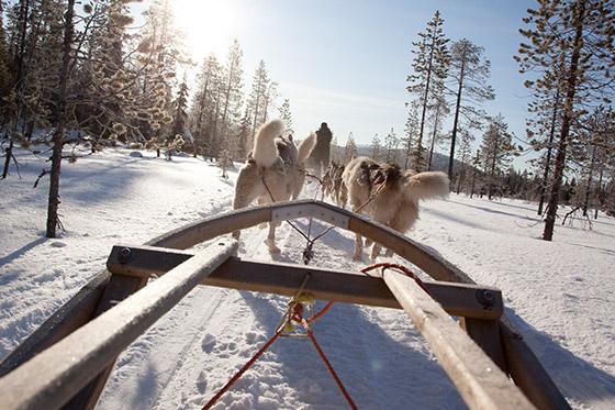 Kom naar 'Villa's Taste of Lapland'