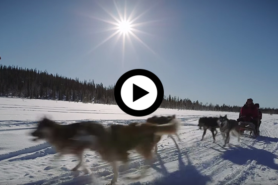 Winteravontuur in Fins Lapland
