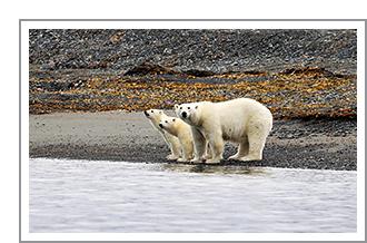 In het rijk van de ijsberen