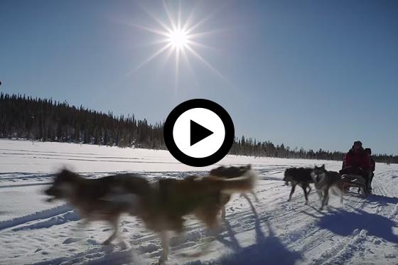 Op winteravontuur in Fins Lapland