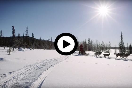 Huskysafari in Fins Lapland
