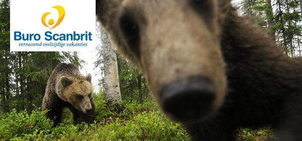 Kom wildlife spotten in Scandinavië en IJsland