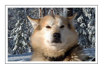 Winter Adventure Sound of Huskies Hotel